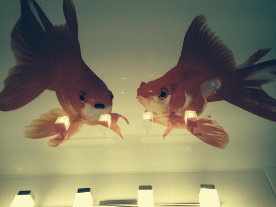 Натяжной потолок с использованием изображения рыбок